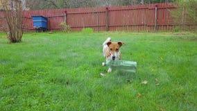 Παιχνίδι σκυλιών με ένα πλαστικό μπουκάλι φιλμ μικρού μήκους