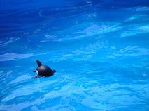 παιχνίδι ψαριών Στοκ φωτογραφίες με δικαίωμα ελεύθερης χρήσης