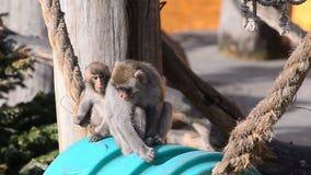 Παιχνίδι Macaques φιλμ μικρού μήκους