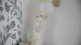 παιχνίδια γατακιών με τους λαμπτήρες κρεμαστών κοσμημάτων κρυστάλλου απόθεμα βίντεο