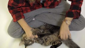 Παιχνίδια κοριτσιών με το γατάκι της στο πάτωμα - γρατσούνισμα κοιλιών απόθεμα βίντεο