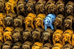 Παιχνίδια σκυλιών στο στάβλο για την πώληση Στοκ φωτογραφία με δικαίωμα ελεύθερης χρήσης