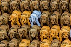 Παιχνίδια σκυλιών στο στάβλο για την πώληση Στοκ Εικόνα