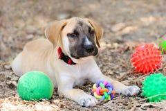 Παιχνίδια σκυλιών Στοκ εικόνα με δικαίωμα ελεύθερης χρήσης