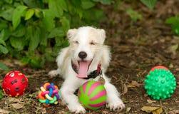 Παιχνίδια σκυλιών στοκ φωτογραφίες