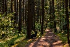 Παιχνίδια του φωτός στο δάσος Στοκ εικόνες με δικαίωμα ελεύθερης χρήσης