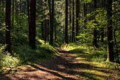 Παιχνίδια του φωτός στο δάσος Στοκ φωτογραφία με δικαίωμα ελεύθερης χρήσης