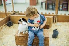 Παιχνίδι αγοριών με τα κουνέλια Στοκ Φωτογραφίες