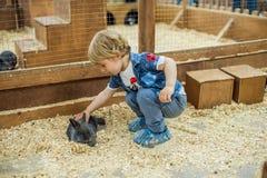 Παιχνίδι αγοριών με τα κουνέλια Στοκ φωτογραφία με δικαίωμα ελεύθερης χρήσης