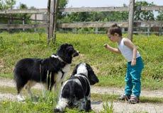 Παιχνίδι αγοριών με τα σκυλιά Στοκ Φωτογραφία