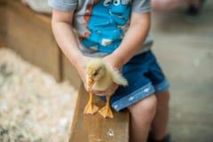 Παιχνίδι αγοριών μικρών παιδιών με τους νεοσσούς Στοκ φωτογραφίες με δικαίωμα ελεύθερης χρήσης