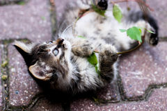 Παιχνίδι γατακιών με ένα φυτό, γατάκι με τα φύλλα, παιχνίδι γατακιών στην οδό Στοκ Εικόνες
