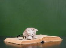 Παιχνίδι γατακιών με τα γυαλιά σε ένα βιβλίο Στοκ Εικόνες