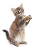 Παιχνίδι γατακιών με τη σφαίρα Στοκ Εικόνες