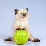 Παιχνίδι γατακιών με το μήλο Στοκ φωτογραφίες με δικαίωμα ελεύθερης χρήσης