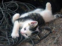 Παιχνίδι γατακιών με το σχοινί Στοκ Φωτογραφίες