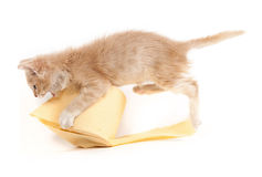 Παιχνίδι γατακιών με το χαρτί τουαλέτας Στοκ φωτογραφία με δικαίωμα ελεύθερης χρήσης