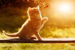 Παιχνίδι γατών/γατακιών στον κήπο σε μια ξύλινη ΤΣΕ συνεδρίασης πινάκων Στοκ εικόνες με δικαίωμα ελεύθερης χρήσης