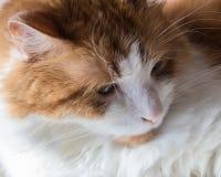 Παιχνίδι γατών σπιτιών πιπεροριζών με το αυγό Στοκ εικόνες με δικαίωμα ελεύθερης χρήσης
