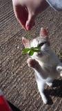 Παιχνίδι γατών στοκ εικόνα με δικαίωμα ελεύθερης χρήσης