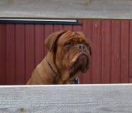 Παιχνίδι εξωτερικού σκυλιών Στοκ φωτογραφία με δικαίωμα ελεύθερης χρήσης