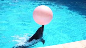 παιχνίδι δελφινιών απόθεμα βίντεο