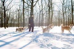 Παιχνίδι κοριτσιών με τα σκυλιά στο χιόνι Στοκ Εικόνες