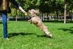 παιχνίδι κοριτσιών σκυλιών Στοκ Εικόνες