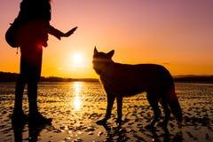 Παιχνίδι κοριτσιών Hipster με το σκυλί σε μια παραλία κατά τη διάρκεια του ηλιοβασιλέματος, σκιαγραφίες με τα δονούμενα χρώματα Στοκ Εικόνα