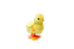 Παιχνίδι κοτόπουλου Στοκ εικόνα με δικαίωμα ελεύθερης χρήσης