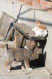 Παιχνίδι κουταβιών με τη γάτα Στοκ φωτογραφία με δικαίωμα ελεύθερης χρήσης