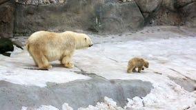Παιχνίδι πολικών αρκουδών και αρκούδα-bear-cubs φιλμ μικρού μήκους