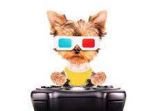 Παιχνίδι σκυλιών στο μαξιλάρι παιχνιδιών Στοκ Φωτογραφίες