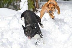Παιχνίδι στο χιόνι Στοκ Εικόνες