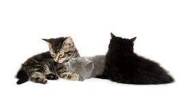 Παιχνίδι τριών γατακιών Στοκ εικόνα με δικαίωμα ελεύθερης χρήσης