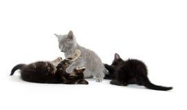 Παιχνίδι τριών γατακιών Στοκ Εικόνα