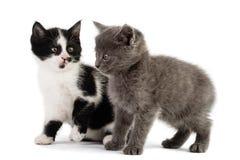 Παιχνίδι δύο γατακιών Στοκ εικόνα με δικαίωμα ελεύθερης χρήσης