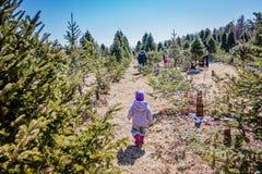 Παιδάκι που ψάχνει τα ζωηρόχρωμα αυγά στο δασικό αυγό δέντρων πεύκων που κυνηγά: παραδοσιακή οικογενειακή δραστηριότητα την ημέρα Στοκ εικόνα με δικαίωμα ελεύθερης χρήσης