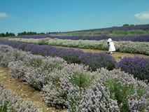 Παιδί και lavender Στοκ Εικόνες