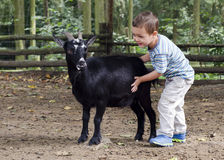 Παιδί με μια αίγα Στοκ Φωτογραφία