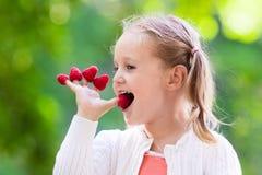 Παιδί που επιλέγει και που τρώει το σμέουρο το καλοκαίρι Στοκ φωτογραφία με δικαίωμα ελεύθερης χρήσης