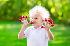 Παιδί που επιλέγει και που τρώει το σμέουρο το καλοκαίρι Στοκ Εικόνα