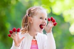 Παιδί που επιλέγει και που τρώει το σμέουρο το καλοκαίρι Στοκ Εικόνες