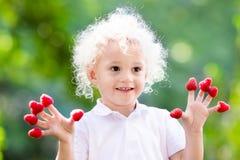 Παιδί που επιλέγει και που τρώει το σμέουρο το καλοκαίρι Στοκ φωτογραφίες με δικαίωμα ελεύθερης χρήσης