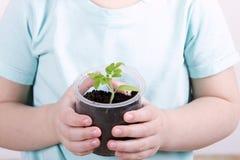 Παιδί που κρατά τις νέες εγκαταστάσεις στα χέρια Στοκ εικόνες με δικαίωμα ελεύθερης χρήσης