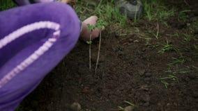 Παιδιά που απολαμβάνουν φυτεύοντας τις εγκαταστάσεις βακκινίων τους φιλμ μικρού μήκους