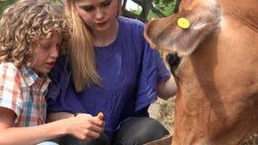 Παιδιά που επισκέπτονται το αγρόκτημα βοοειδών απόθεμα βίντεο