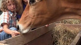Παιδιά που επισκέπτονται το αγρόκτημα βοοειδών φιλμ μικρού μήκους
