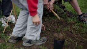 Παιδιά που συλλέγουν το χώμα γύρω από τις φρέσκες φυτευμένες εγκαταστάσεις βακκινίων απόθεμα βίντεο
