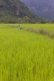 Παιδιά στα αγροκτήματα. Στοκ Φωτογραφία